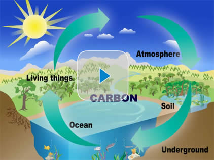 Cycle of Carbon Dioxide