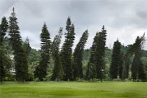 Leaning trees