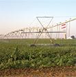 Photo of irrigation
