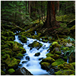 Photo of a stream in the woods
