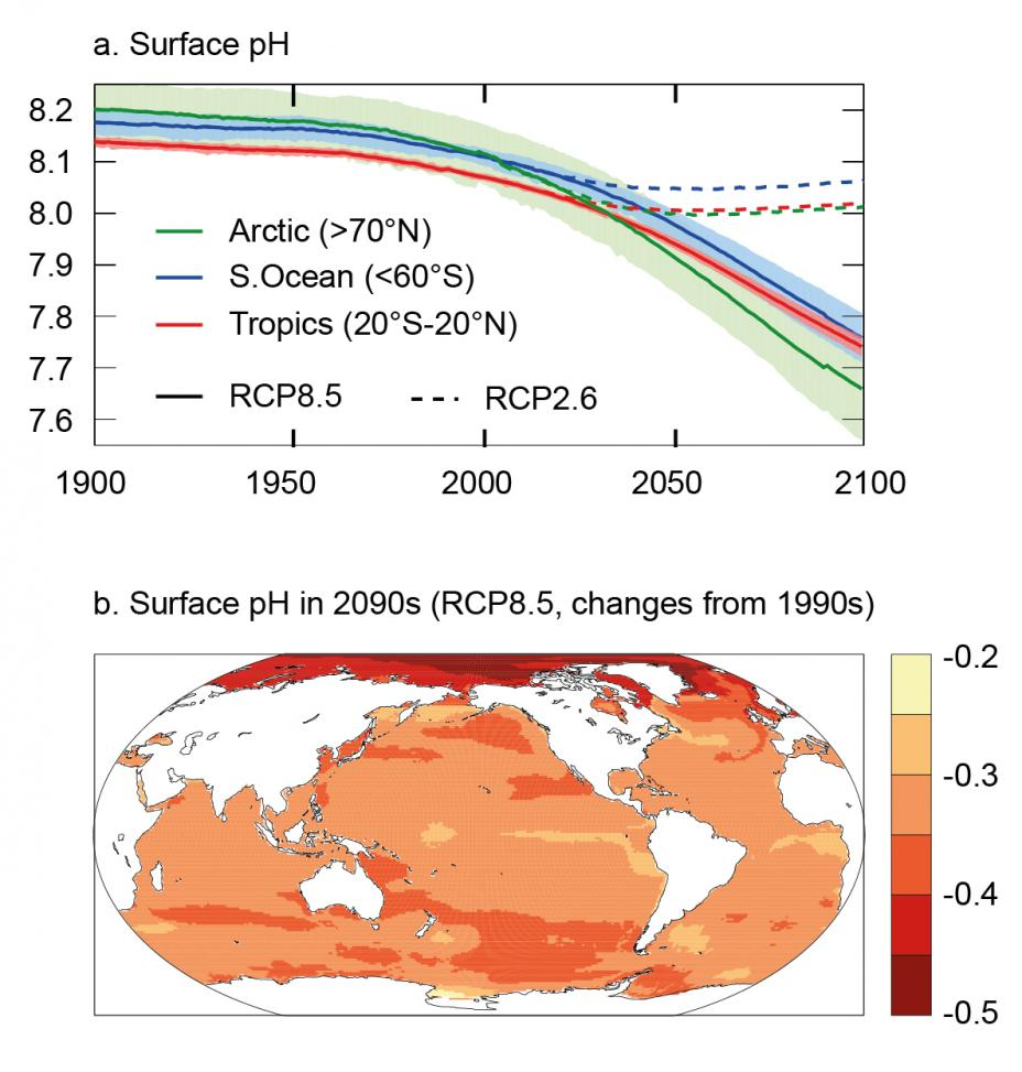 2 figures: 1st, graph showing declines in surface pH in the Arctic, S.Ocean, & Tropics from 8.1-8.2 in 1900 to 7.5-7.8 under RCP8.5 and 8.0-8.1 under RCP2.6 in 2100 . Then, a map shows change in surface pH in the 2090s. Most of the planet declines 0.3-0.5