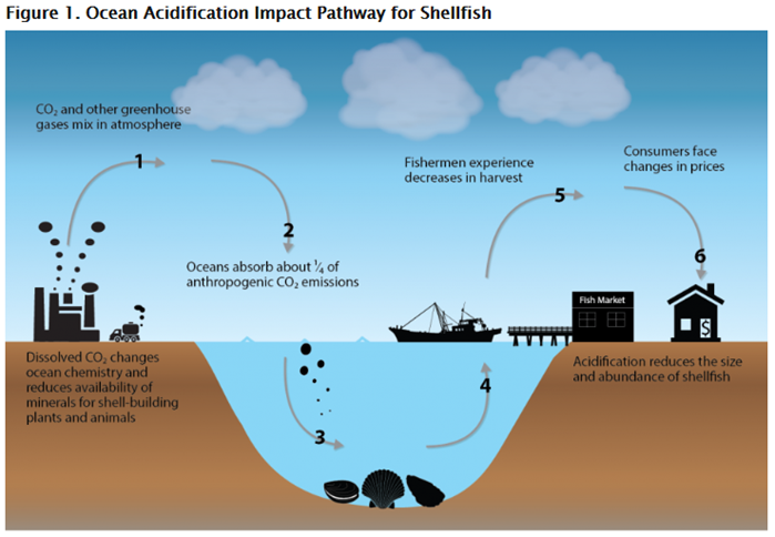 Process Diagram: Impact pathway of carbon dioxide emissions on the shellfish market
