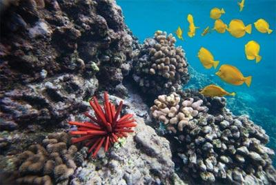 Photograph of a coral reef with a sea urchin yellow fish.