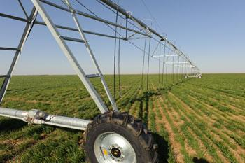 Center pivot sprinkler irrigation system located on a winter wheat cover crop in Morton, Texas.