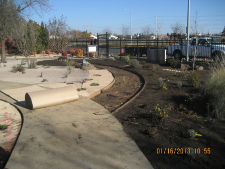 Cardboard layer was placed over the soil to help eliminate weed growth at Donna Dean Garden.