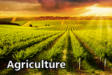 icon for the agriculture sector