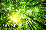 Icon for the forest sector