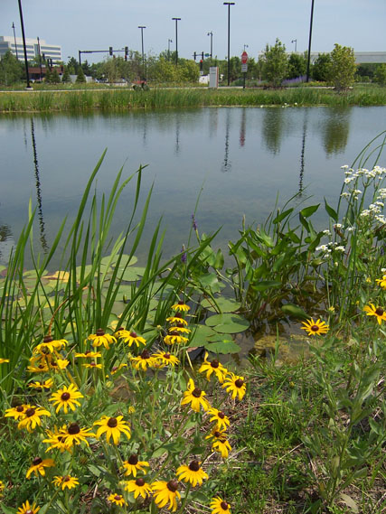 Native Plants On The Ponds Edge
