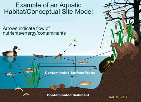 Ecological Risk Assessment Step 3 Region 5 Superfund Us Epa