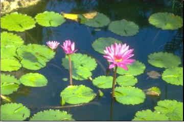 terrestrial plants and aquatic plants