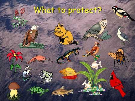 Ecological Risk Assessment Step 3 | Region 5 Superfund ...